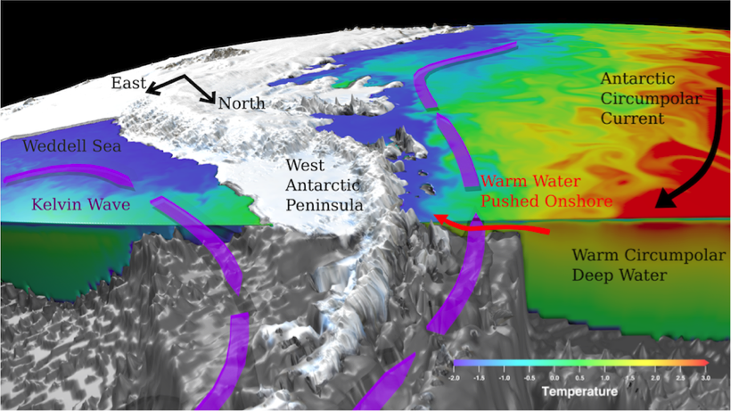 Schematic of the warming response of West Antarctic Peninsula waters to East Antarctic wind perturbation