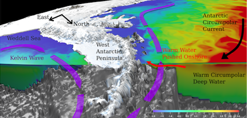 Schematic of the warming response of West Antarctic Peninsula waters to East Antarctic wind perturbation.